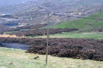 Thousands of fruit trees destroyed over 'security concerns' in SE Turkey