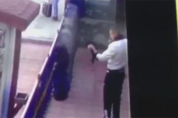 Turkish soldier torturing a kitten detained following widespread outrage